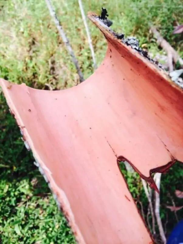 Свежесрезанная корица с дерева