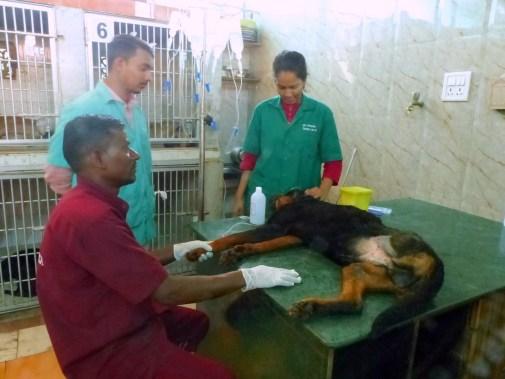 SPCA Thane