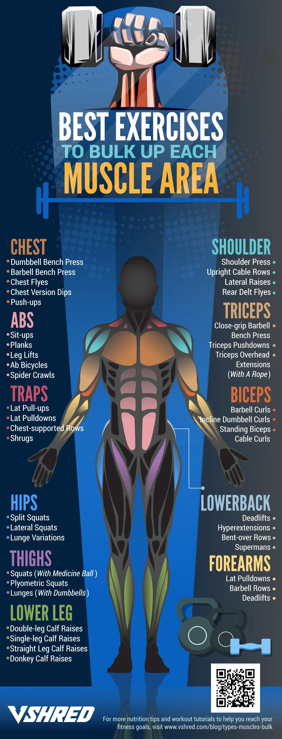 infographic | Best Exercises To Bulk Up Each Muscle Area | Best of 2018 on V Shred