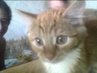 Сочинение мое любимое животное кот