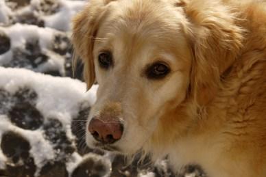 Dogs love snow
