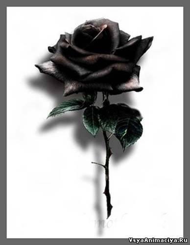 Розы чёрные Картинки для личных дневников, блогов, гостевых