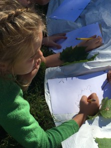 Drawing our leaves