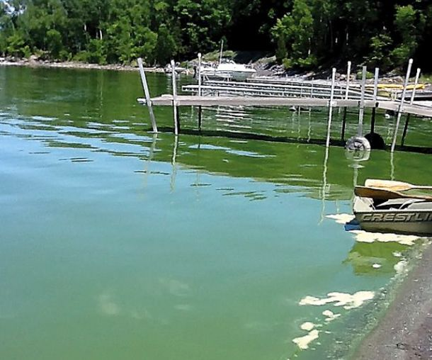Lake Champlain algae bloom