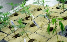Medical marijuana expansion gets governor's signature