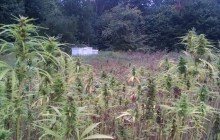 Hemp growers concerned about new dispensary rules