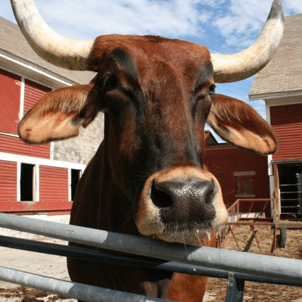 Brattleboro Retreat Farm