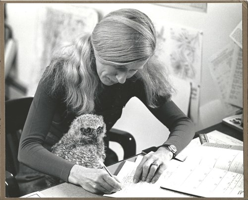 Sally Laughlin was a founder and executive director of the Vermont Institute of Natural Science, then a statewide environmental education and research organization, from 1974 to 1992. One of the pleasures of this grueling job was taking care of orphaned birds -- the young great horned owl became a star of the Owls of Vermont presentation and is seen in this 1977 photo assisting Sally at her desk. Courtesy of Sally Laughlin