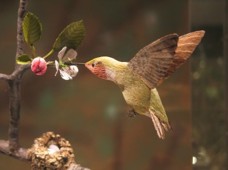A jewel-like ruby-throated hummingbird approaches to sip from an apple blossom in a display at the Birds of Vermont Museum in Huntington. The bird, and hundreds of others, was carved from basswood by self-taught naturalist Bob Spear. Each bird is displayed in its natural nesting or foraging habitat to help visitors understand the birds' place in Vermont's environment. Photo courtesy of the Birds of Vermont Museum