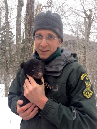 Chris Bernier holds a weeks-old bear cub to keep it warm while the radio collar on the cub's mother is being changed. Bernier, who oversees management of 17 fur-bearing Vermont animals for the Fish & Wildlife Department, recently announced that the long-vanished American marten appears to be back and reproducing in Vermont. Photo courtesy Chris Bernier