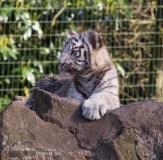 Olmense Zoo (2)