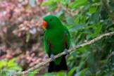 Papegaai Loroparque