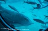 Rog Submarine safari tenerife (2)