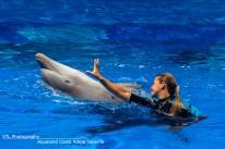 Aqualand Dolfijn met trainer
