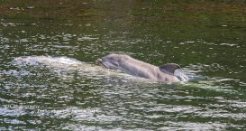 Dolfinarium Harderwijk babydolfijn