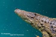 Krokodil Jungle Park