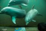Dolfijnen Dolfinarium Harderwijk 2015