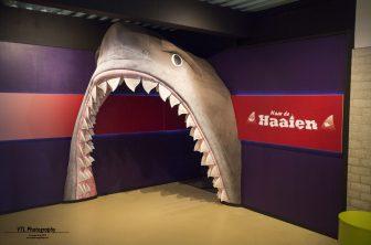Tentoonstelling haaien