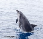 Dolfijn (2)