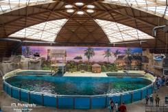Dolfinarium Boudewijn Seapark (4)