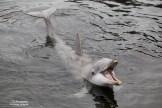 Dolfijn Dolfinarium (2)