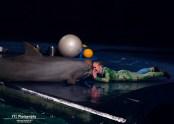 dolfijndomijn-dolfinarium