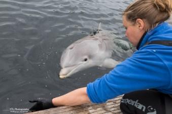 Traingingssessie dolfijntje James (2)