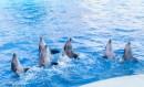 Dolphins Marineland Antibes (2)