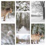 oosterheide in de sneeuw