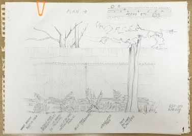 Sketches showing plants and landscape details, E. Maria Roth Architectural Collection, Ms2007-009