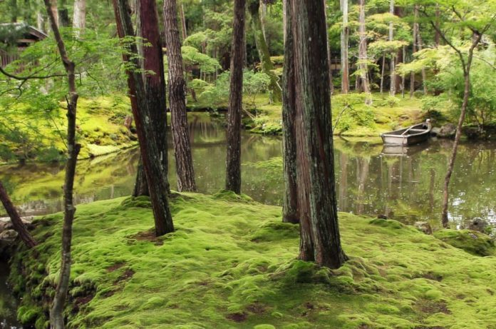 Japanese moss garden at Saiho-ji temple Koke-dera in Kyoto, one of Kyoto`s Unesco World Heritage Sites.