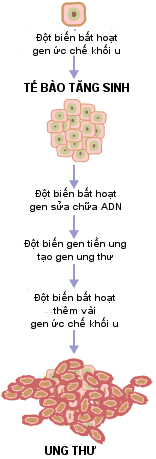 Hình thái tổ chức của mô từ dạng bình thường đến khi phát triển thành khối u