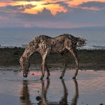 Aesthetic Horse Sculptures Created Out Of Driftwood By James Doran Webb Vuing Com