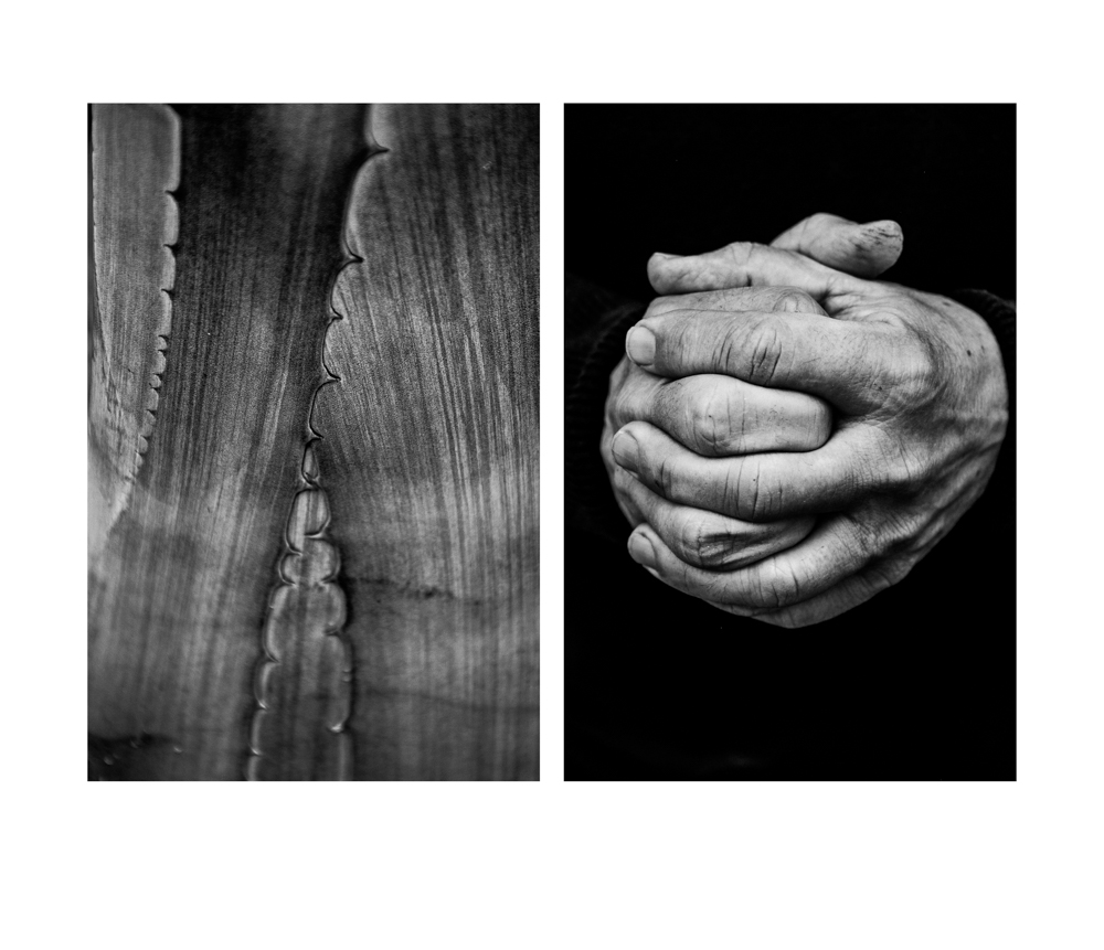Diptych_7