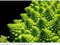 macro-cabbage