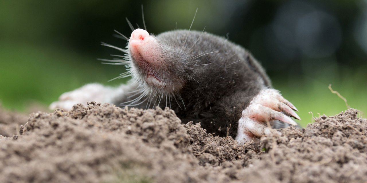 Noch mehr Bio in der Landwirtschaft!
