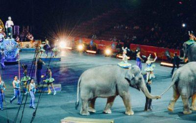 Shoveling Elephant Poop