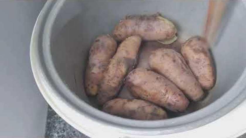 hướng dẫn luộc khoai lang ngon - Cách luộc khoai lang bằng nồi cơm điện