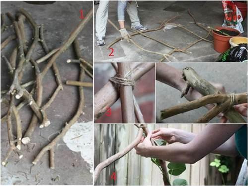 Cách trồng khoai lang trong bao đất bằng mầm ươm từ củ khoai - 12