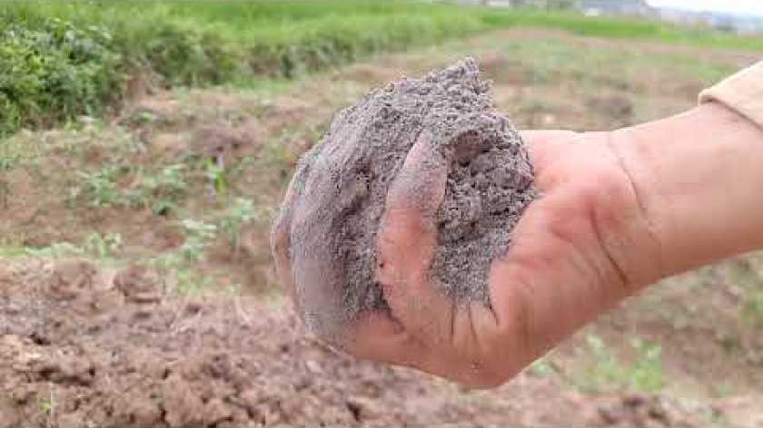cách nấu khoai lang mật - Cách trồng khoai lang mật nghệ Lộc Bình chuyên nghiệp