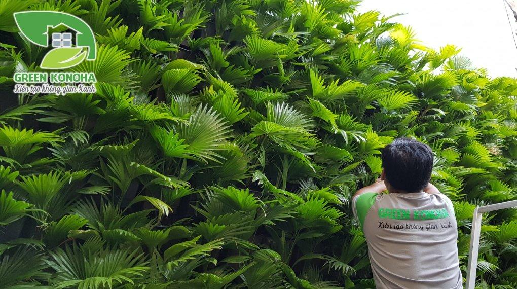 Bảo trì vườn tường tại HCM