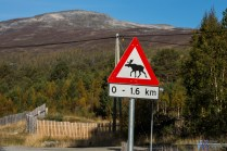 Moose crossings warning sings started to appear quite often.