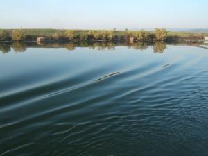 Danube, river