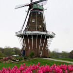 tulips, Holland, Mich., windmill