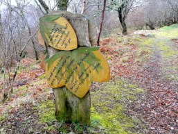 forest poetry