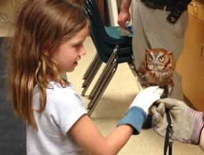 owl, zoo