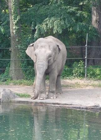 Elephant - Sam Felder