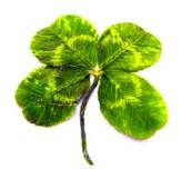 four-leaf clover, luck