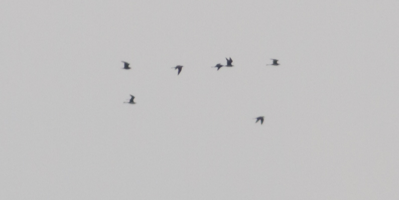 Middelste Jagers, Vlissingen, 8 mei 2015, Thomas Luiten