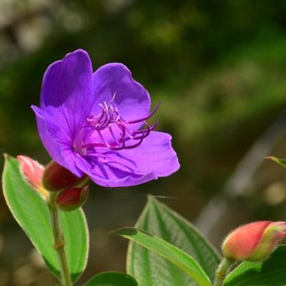 0901道端のお花(*´ω`)